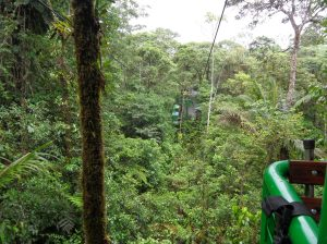 Bosque Chuvoso SomosdoMundo