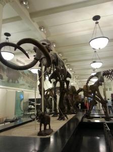 Dinossauro SomosdoMundo