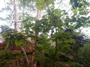 Floresta Tropical  SomosdoMundo