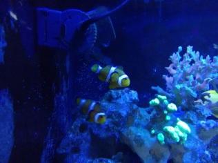 Aquario de SP - SomosdoMundo